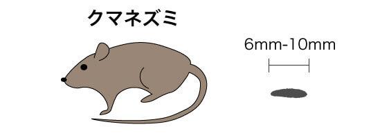 画像に alt 属性が指定されていません。ファイル名: クマネズミのコピー-1.jpg