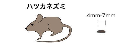 画像に alt 属性が指定されていません。ファイル名: ハツカネズミのコピー-1.jpg