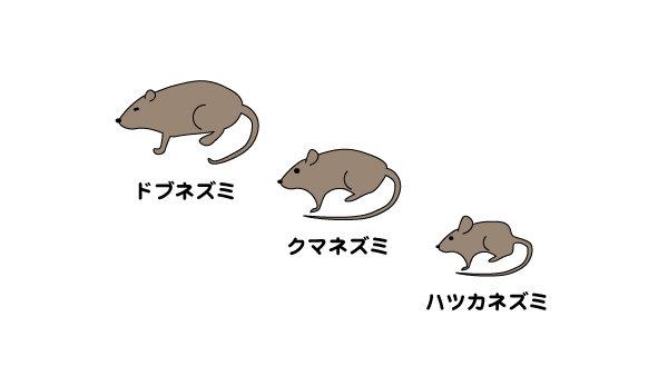 家に侵入するネズミの種類は?