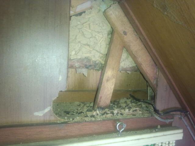 屋根裏ネズミ被害