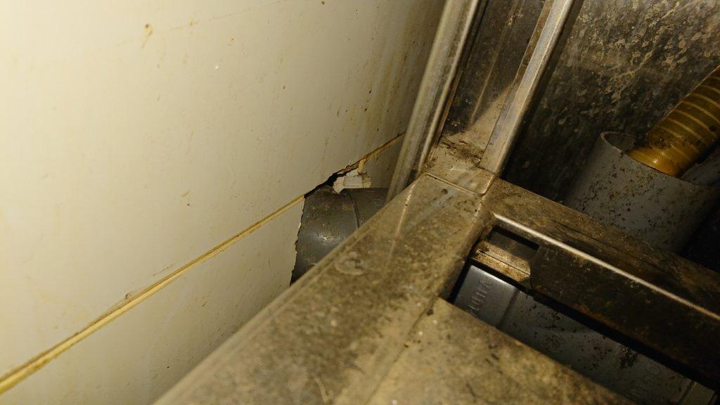 千葉市中央区ネズミ駆除