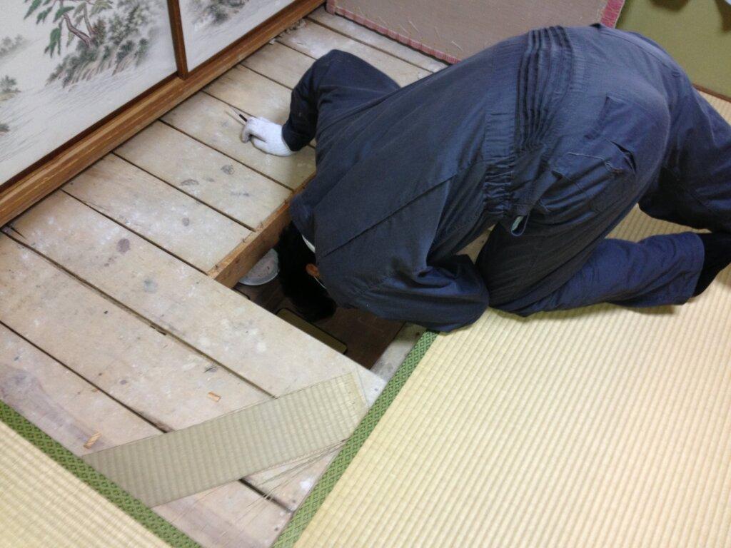 大阪ネズミ駆除の事例3
